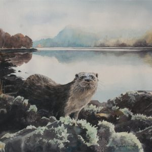 Otter, Morning mist