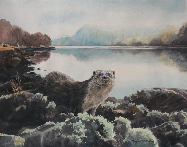 Otter, Morning mist