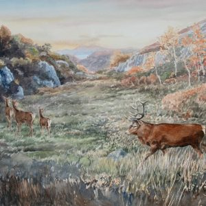 Red deer, Tor Mhor